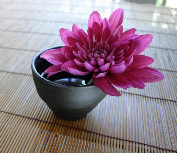 chrysanthemum-757439_1280